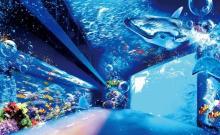 360度の大迫力 仙台うみの杜水族館プロジェクションマッピング