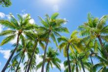 家族で満喫!「夏休みのハワイ旅行」レンタカーナシでOKな楽しみ方3つ
