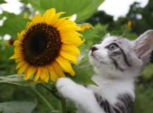 ネコ写真多数!鹿児島育ちの旅する猫が海外でも話題に