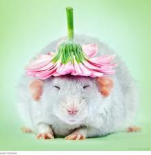 ネズミを好きになって! かわいいネズミ写真を撮り続ける写真家