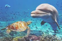 【夢占い】イルカの夢は悩みが解消へ向かう暗示!? 海の生き物の夢があらわすこと