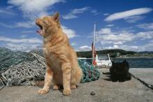 気ままな猫たちの姿に癒される!柏タカシマヤで入場無料の猫の写真展開催