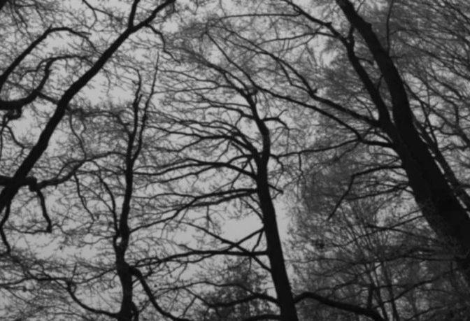 【ムー実話怪談】森の中で聞いた叫び声…無視していたら、知らないうちに「囲まれていた」