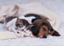 大切な家族とお財布の守り神 ペット保険のススメ